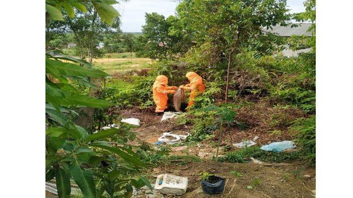 Warga Bintan Temukan Sarang Tawon Vespa di Semak-semak, Kini sudah Dievakuasi Petugas