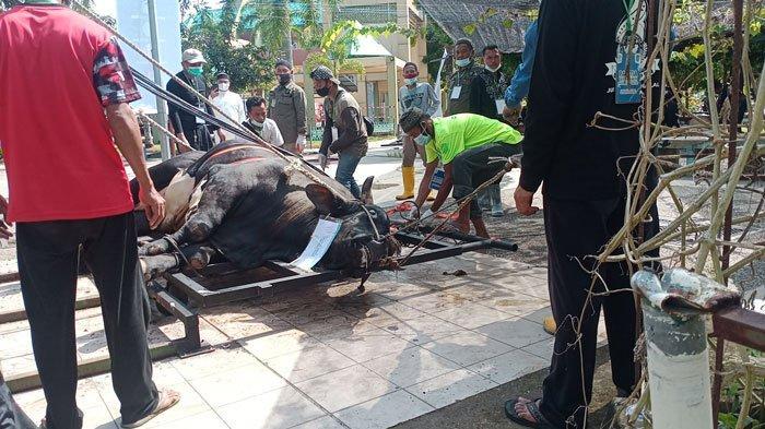 Hewan Kurban di Batam Tahun Ini Berkurang 973 Ekor, Terbanyak Batam Kota Potong 732 Ekor