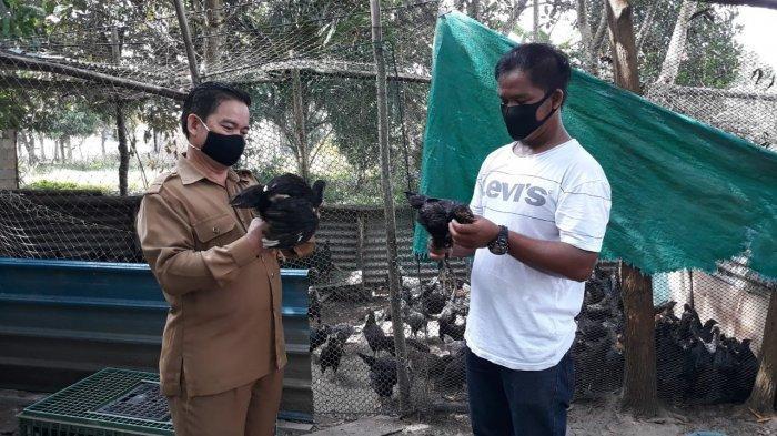 DKPP Bintan Jamin Hewan Ternak yang Akan Dikonsumsi Masyarakat Bebas Antraks Dkk