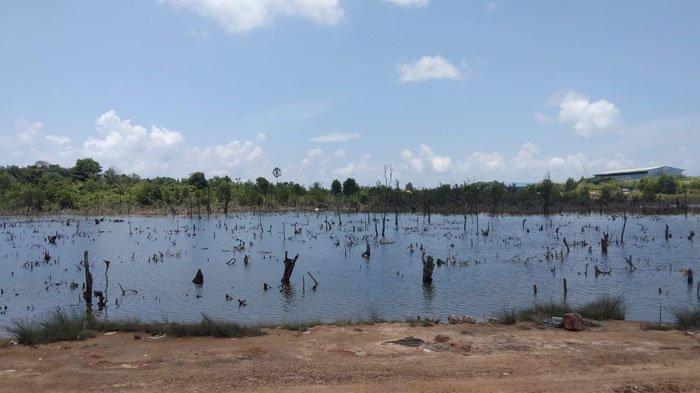 Kondisi lahan hutan yang tersisa di Sei Pelenggut, Kecamatan Sagulung, Kota Batam