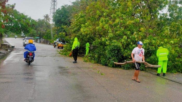 Pohon Besar Tumbang di Pulau Karimun Akibat Hujan Lebat Disertai Angin Kencang