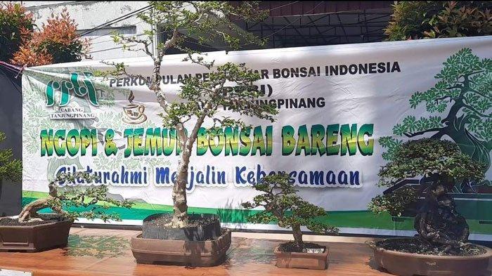 Mengenal Lebih Dekat Tanaman Bonsai Dari Kacamata Penasehat PPBI Cabang Tanjungpinang