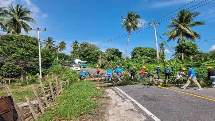 PLN Ranai Rutin Lakukan Perampalan Pohon, Cegah Pemadaman Listrik di Natuna