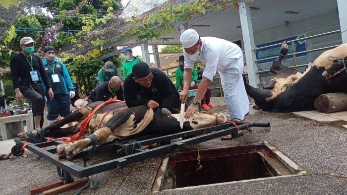 Panitia Masjid Agung Batam Berjumlah 61 Orang, Potong 11 Ekor Hewan Kurban