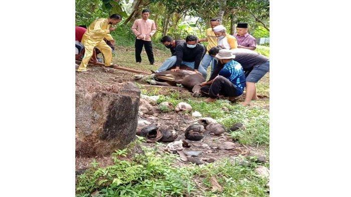 Pemotongan Hewan Kurban di Natuna, Masih Ada Petugas Tidak Pakai Masker