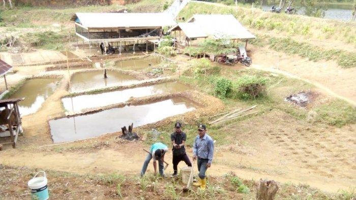 Tidak Hanya Punya Pulau Nan Indah, Ternyata Anambas Juga Daerah Penghasil Beras di Kepri