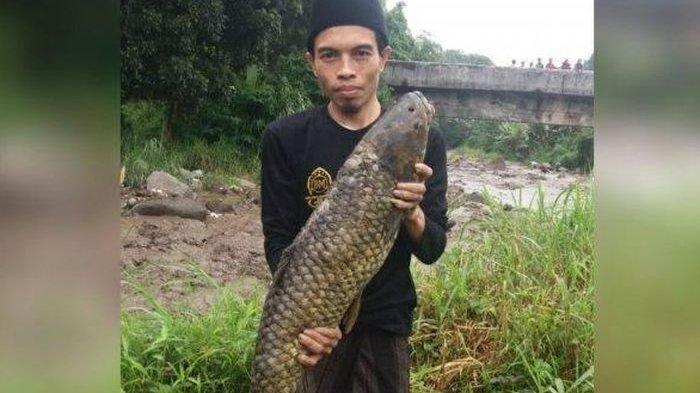 Usai Banjir Bandang di Puncak Bogor, Warga Digegerkan Penemuan Ikan Raksasa, Harganya Fantastis!