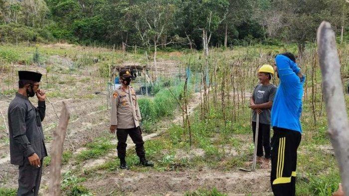 Kampung Tangguh di Bintan, Warga Tambelan Garap Lahan untuk Tanam Sayur