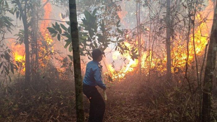 Kebakaran Hutan di Kawasan Bandara Hang Nadim Batam, Titik Api Dekat Depot Avtur