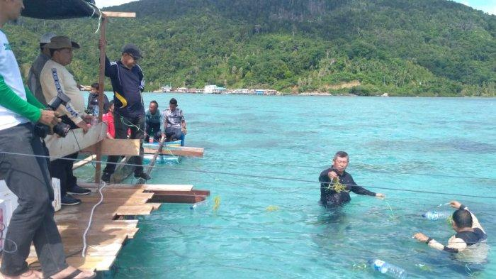 Tanam Rumput Laut Perdana, Bupati Pastikan Ada Investor Penampung Bupati : Tidak Perlu Khawatir