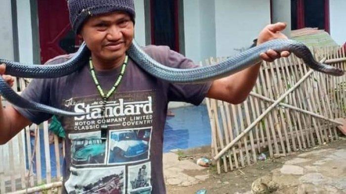 Kisah Jana Pria Asal Bandung, Tewas Dililit Ular Sanca Peliharaan Sepanjang 3 Meter