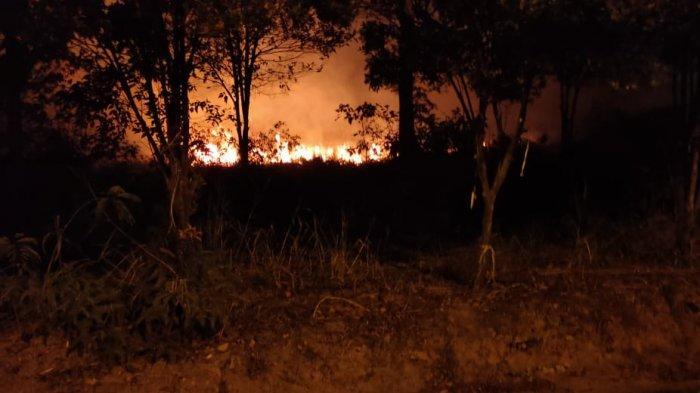 10 Hektare Hutan di Jemaja Anambas Terbakar, Polisi Hutan Minta Bantuan Warga