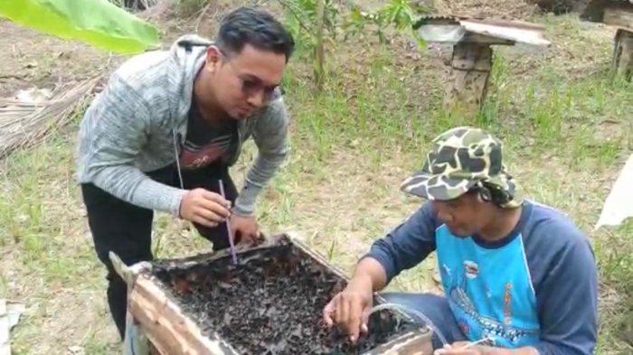 Kisah Syafitra Jadi Pengusaha Madu di Bintan, Belajar Autodidak dari YouTube