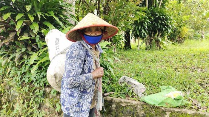 Yatimah, seorang nenek berusia 70 tahun bertahan hidup dari hasil memotong karet.