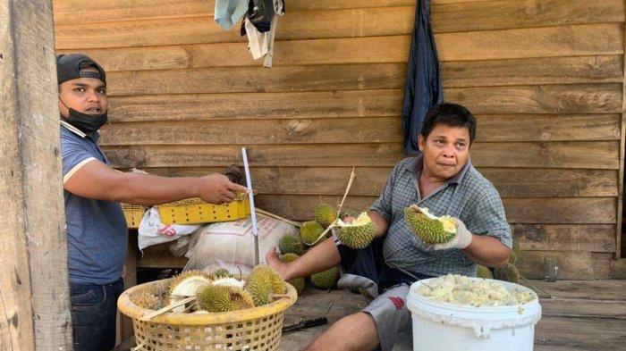 MESKI Cuma Setahun Sekali, Aidil Raup Jutaan Rupiah Sehari saat Musim Durian Tiba
