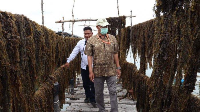 bright PLN Batam Tingkatkan Perekonomian Masyarakat Kepulauan Melalui Budidaya Rumput Laut