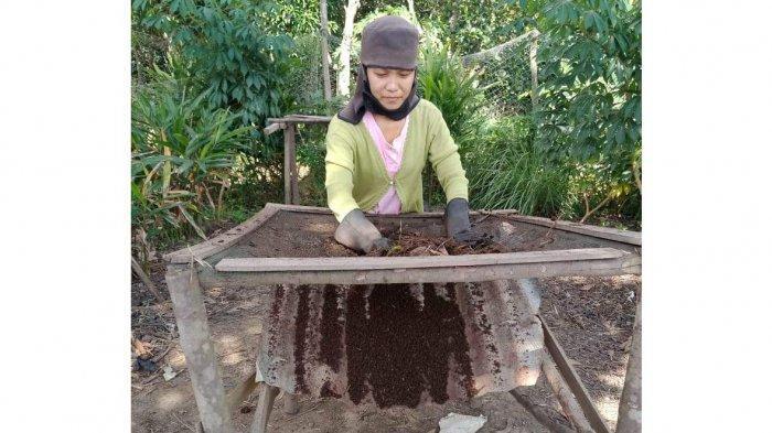 KISAH Pasutri di Tanjungpinang Jual Tanaman Hias hingga Kerja Serabutan, Rayakan Natal saat Pandemi