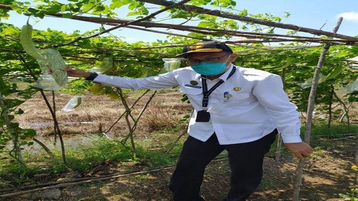 Petani Sawah di Natuna Bakal Dapat Bantuan Bibit Padi Dari Pemkab Tahun Ini