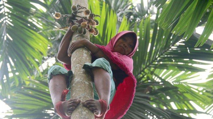 Kisah Siti Hajar, Janda Miskin yang Sanggup Panjat 60 Pohon Pinang Sehari untuk Hidupi 4 Anaknya
