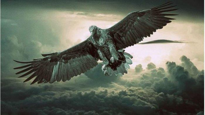 Ada Makna Baik Dibalik Mimpi Melihat Burung Elang, Simak Artinya Menurut versi Primbon Jawa
