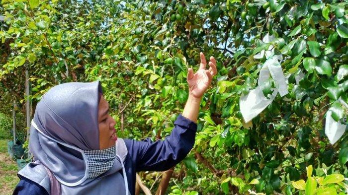 Agribisnis Temiang Batam, Jadi Alternatif Wisata Alam Edukatif
