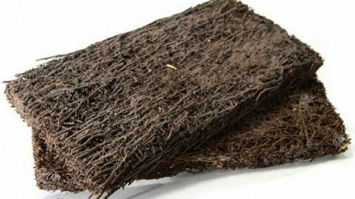 Ragam Media Tanam Organik yang Cocok untuk Tanaman Hias dan Sayuran, Bikin Subur dan Tumbuh Sempurna