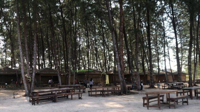 Beginilah tampak suasana Wisata Pohon Pinus di Bintan Blue Coral, Kabupaten Bintan, Provinsi Kepulauan Riau