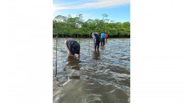 Tanam Mangrove, Investasi Masa Depan di Pulau Natuna