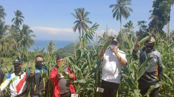 Desa di Anambas Ubah Lahan 2 Hektare Jadi Cuan, Bupati Sampai Angkat Jempol