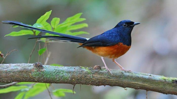 Arti Mimpi Menembak Burung Menurut Primbon, Pertanda Adanya Masalah Hidup yang Rumit