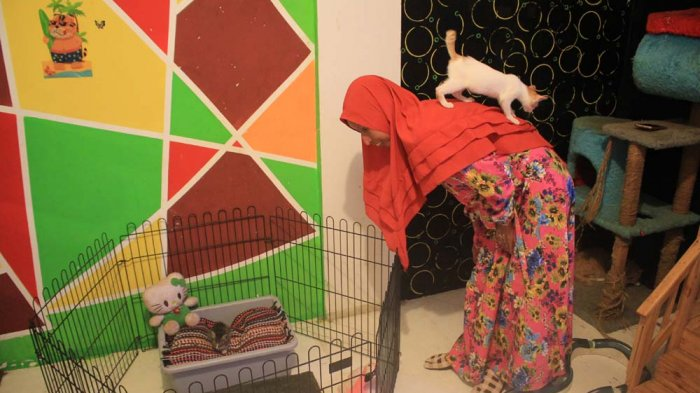 Demi Selamatkan Kucing, Cat Rescue Team Bangun Shelter Khusus
