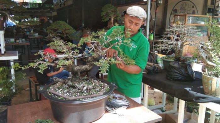 CERITA 'Penggila' Bonsai dari Tanjungpinang, Berawal Hobi Hingga Dulang Rupiah