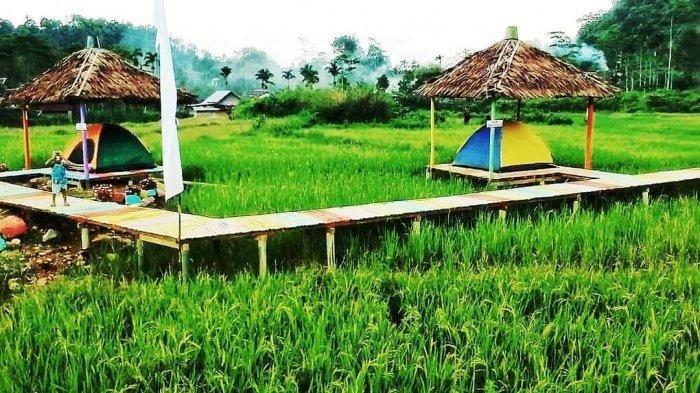 Destinasi wisata baru Sawah Tidur di Stabat, Sumatera Utara