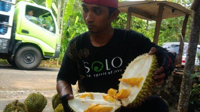 Jenis Durian Kencono Rukmi Bikin Ketagihan, Cocok Bagi Kamu yang Tak Suka Bau Begitu Menyengat