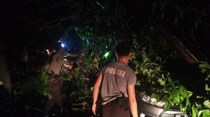 Angin Kencang Tumbangkan Pohon Besar di Tanjungpinang, Mobil Pemkab Bintan Jadi Korban
