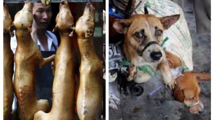 Pesta Makan Daging Anjing 10 Hari di China Santap 5.000 Ekor Binatang