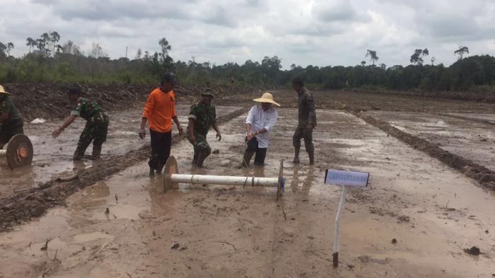 Gubernur Kepri saat itu, Nurdin Basirun turun ke sawah di Lingga, Rabu (7/9/2016)