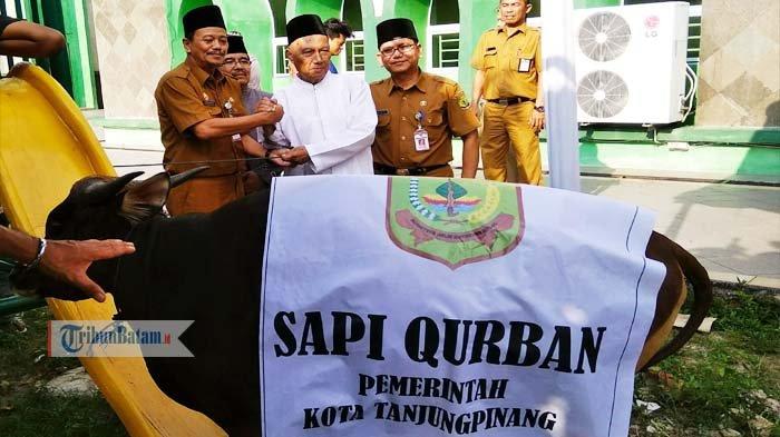 Pemko Tanjungpinang Salurkan 36 Hewan Kurban, Salah Satunya keMasjid Agung Al Hikmah