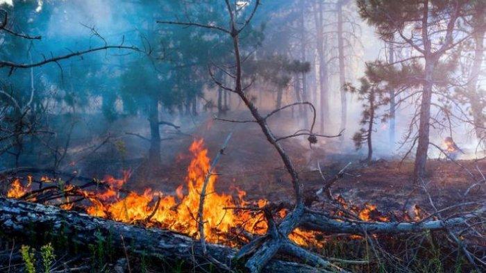Forest and Land Fires in Riau, 147 Hotspots Spread in 11 Regencies and Cities