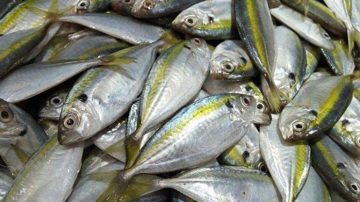 Kaya Akan Omega 3, Berikut Beberapa Jenis Ikan Asli Indonesia Buat Cerdas Otak! Apa Itu ?