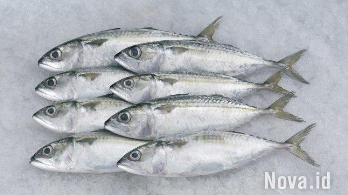 Ingat! Lima Hari Sebelum Dikirim ke Luar Kota-Luar Negeri, Ikan Harus Dikarantina! Ini Biayanya!