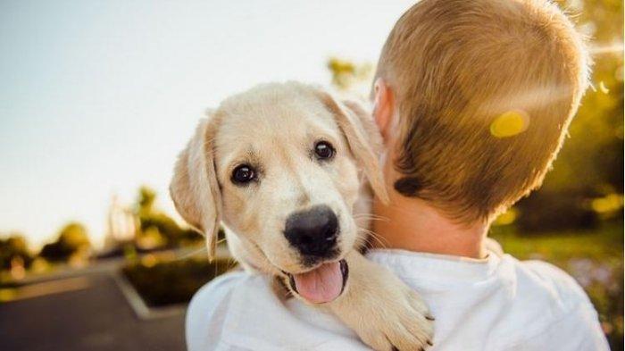 Ilustrasi menggendong anjing