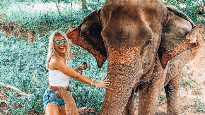 Berlaku Mulai 2020, Pemerintah Kamboja Larang Wisatawan Naik Gajah di Angkor Wat