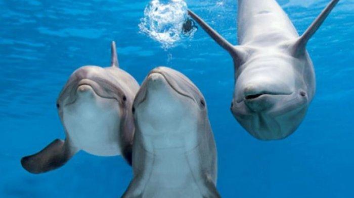 ilustrasi-lumba-lumba-di-maldives.jpg