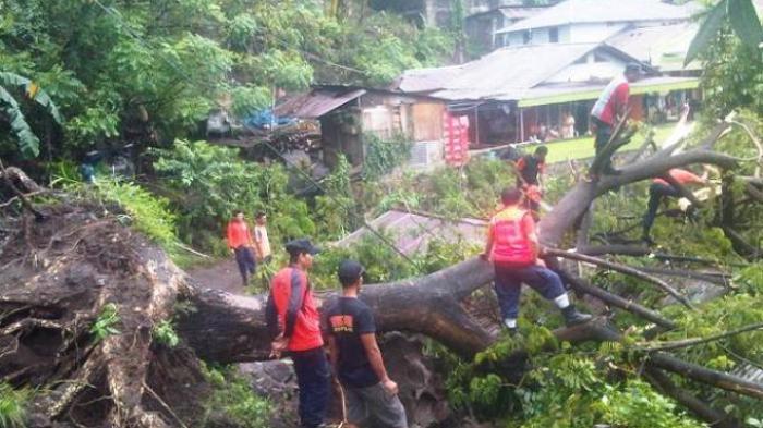 Bagaimana Hukumnya Bila Pohon Tetangga Tumbang Dan Menimpa Rumah?