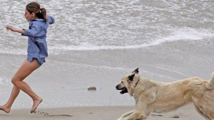 Arti Mimpi Dikejar Anjing Pertanda Ada Kekhawatiran hingga Masalah Dunia Dapat Fatal, Benarkah?