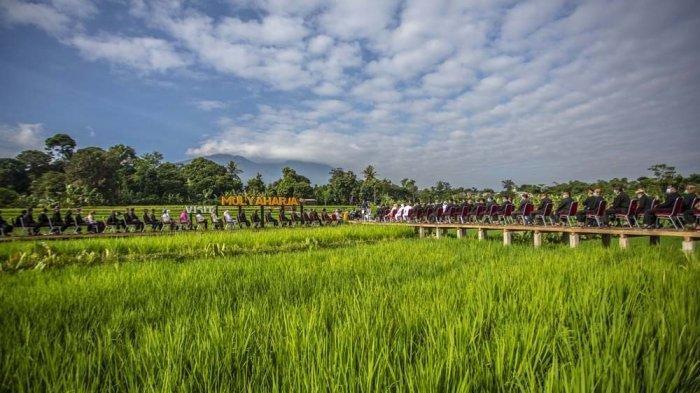 Hamparan Sawah di Kampung Tematik Ciharashas Mulyaharja Jadi Destinasi Wisata Alam Paling Top