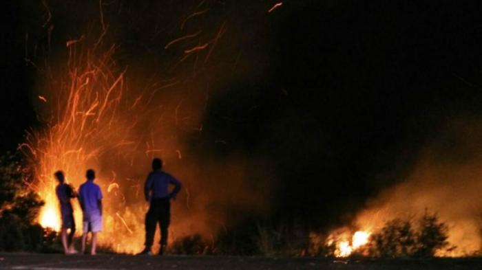 3 Bulan Terakhir, 38 Kasus Kebakaran Terjadi di Kabupaten Bintan, Kebanyakan Kebakaran Hutan