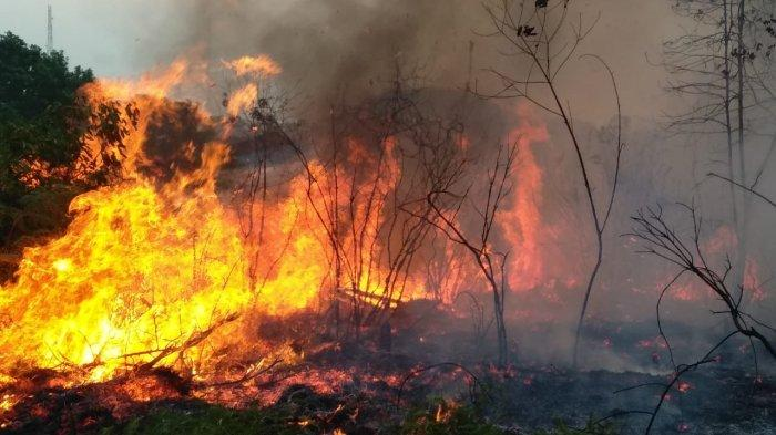 Forest and Land Fires in Bintan, Task Force Team takes 3 Hours to Put Out Fire in Masiran Village