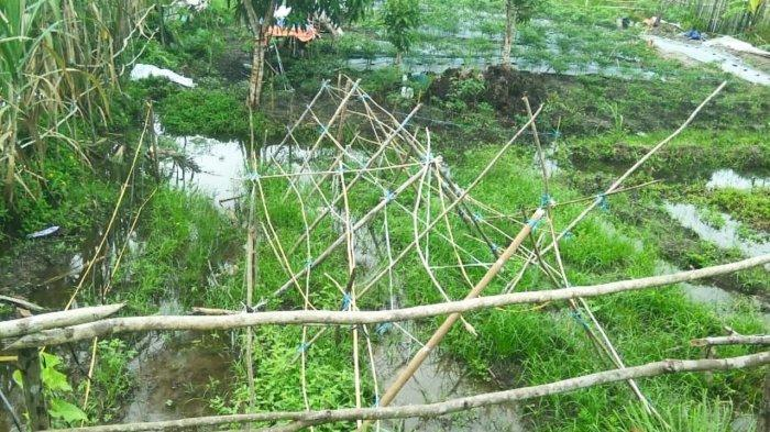Warga Desa Batu Berdaun Lingga Gagal Panen, Air Rendam Kebun saat Hujan Deras
